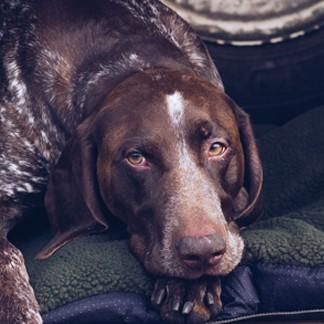 Hondenartikelen